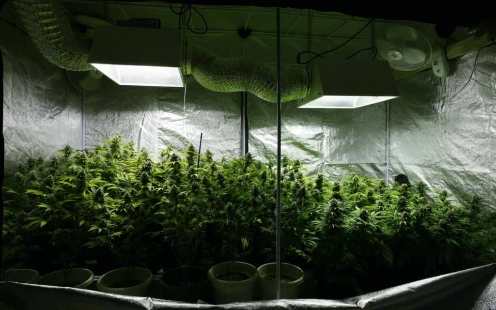 Grow tents indoor reviews