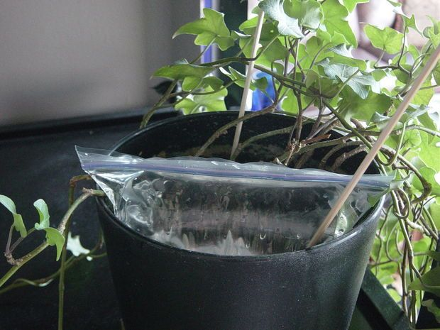 Are you watering your indoor plants right? | Tips