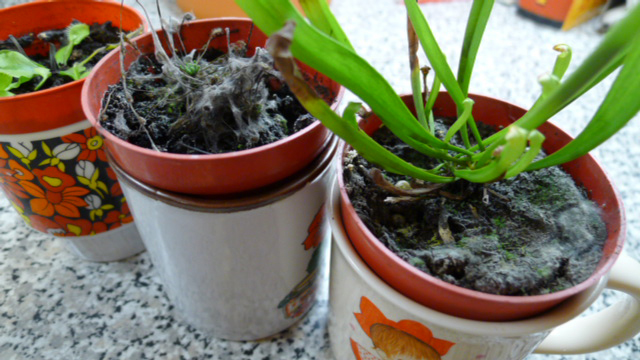 How to preserve plants from mold