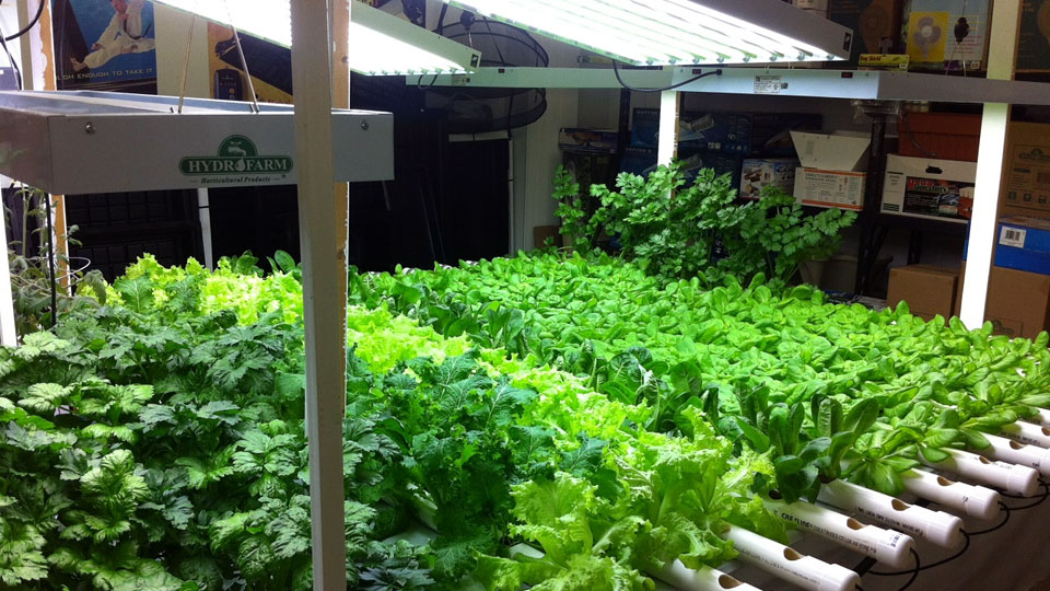 Hydroponic Gardening Mistakes that you should avoid