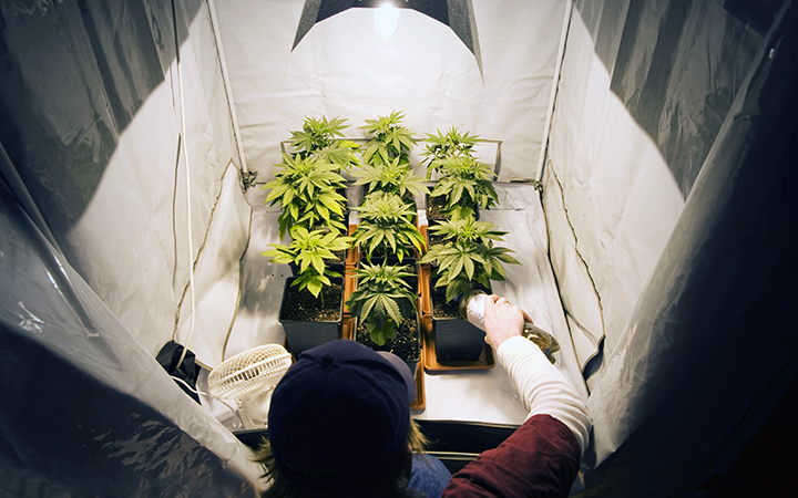 A marijuana plant will grow faster if itu0027s grown under the constant light of its growth for its first two months. L&s should be maintained as plants ... & Marijuana indoor growing secrets | How to grow