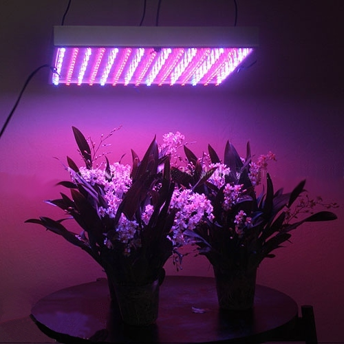 LED grow lights feasible for indoor plants