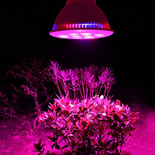 LED grow lights performs better than sunlight for plants
