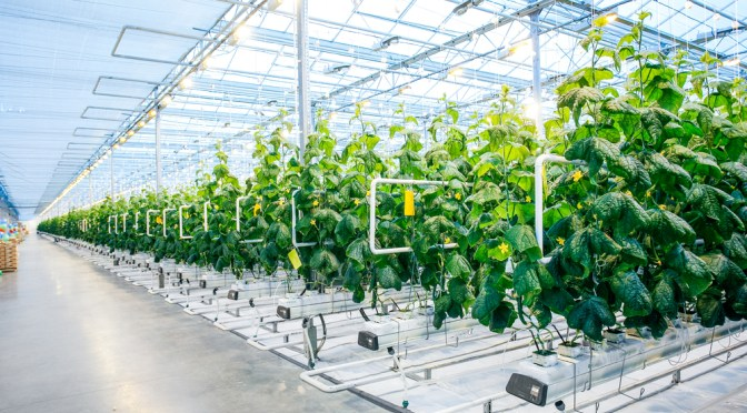Prevent Climate-Related Crop Production Disruption Using LED Grow Lights