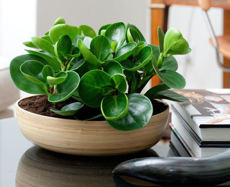 Save houseplants from dying