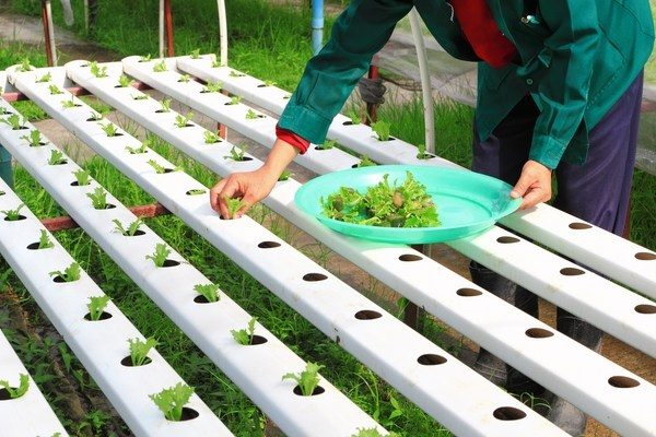 Hydroponics Grow system- without soil
