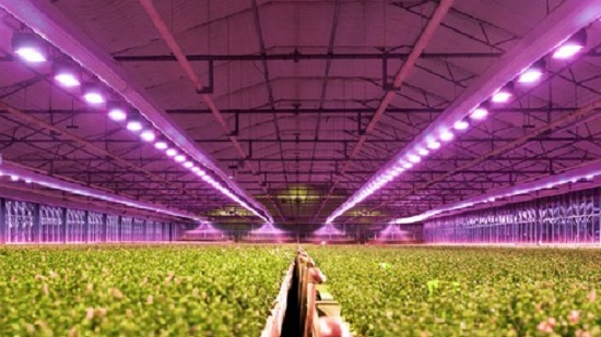 LED grow lights for greenhouse
