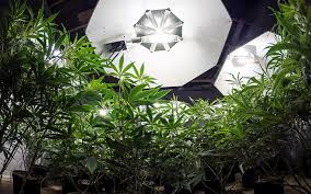 Mariuana Indoor Led grow lights tips