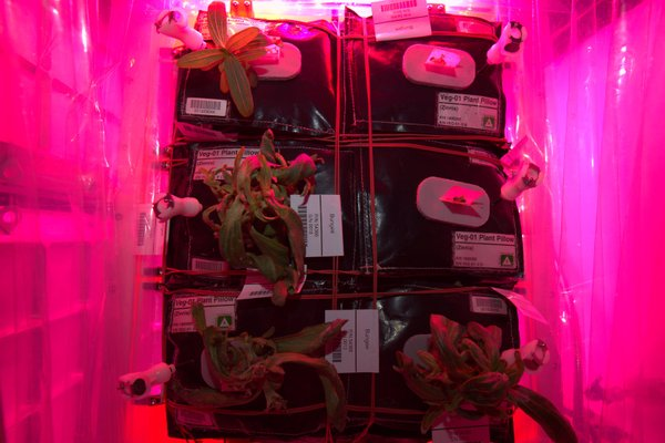 NASA Led grow lights