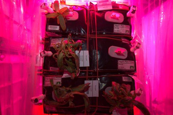 NASA Led grow lights