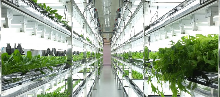 Prevent Climate-Related Crop Production Disruption Using LED Grow Lights 2