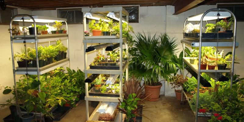 Tips to set up an affordable indoor grow space