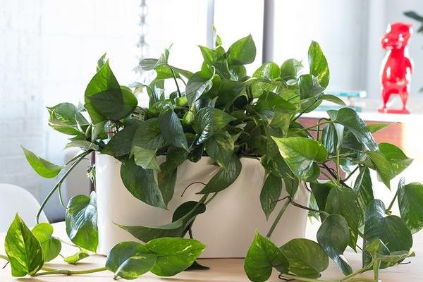 preserve houseplants